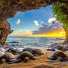 Honu Cove