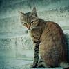 A Tricky Cat