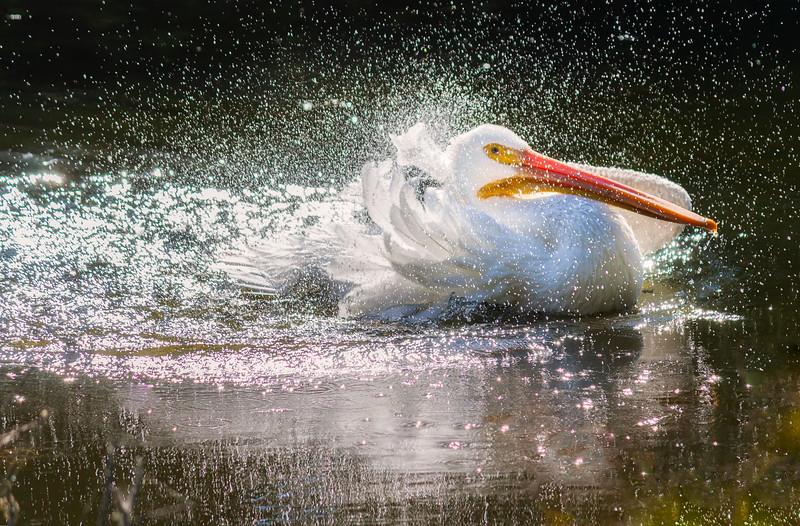 Its a splash zone!