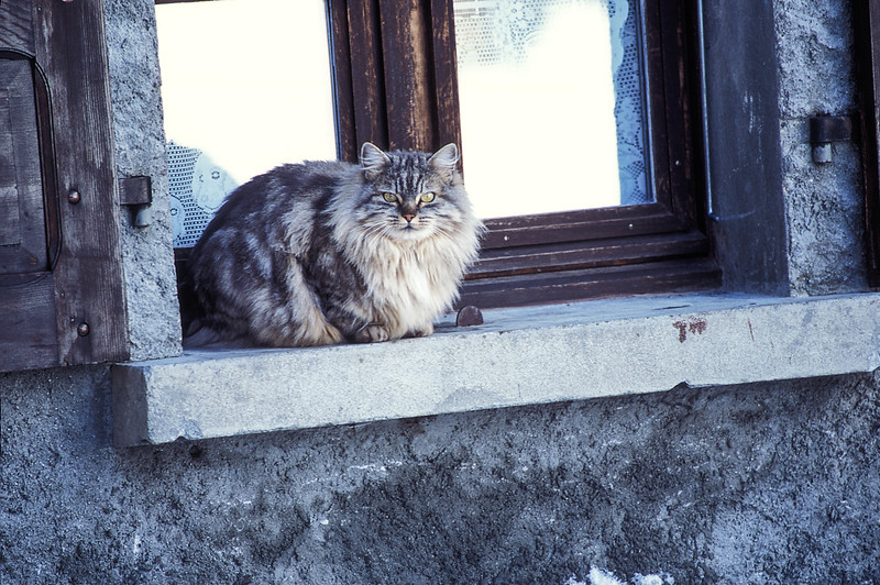 Neighbor cat Chamonix France