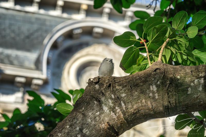 Iolani's Proud Tern