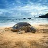 Beach Bum at Ho'okipa
