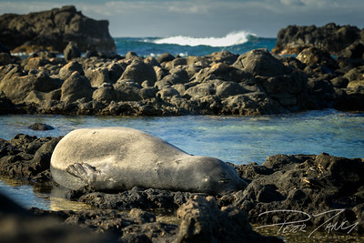 The Bedroom of the Monk Seal