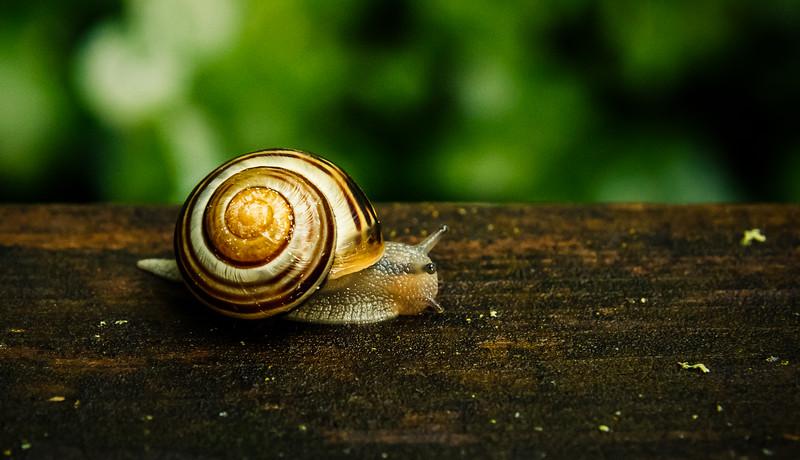 The Polish Snail