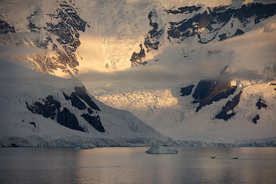 Antarctica, Charlotte Bay: Snow-covered mountains, clouds hanging low over a quiet bay where whales dive for food, and the evening light glinting off the water makes one feel like they have found paradise.