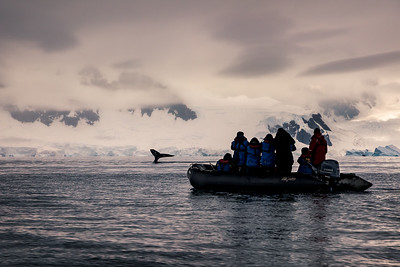 Antarctica: This silhouette of photographers on their Zodiac standing and trying to get a shot of the whale diving was how many of our days were spent along the Antarctic Peninsula. There were so many whales diving at Portal Point we didn't have to go far to get a shot of them.