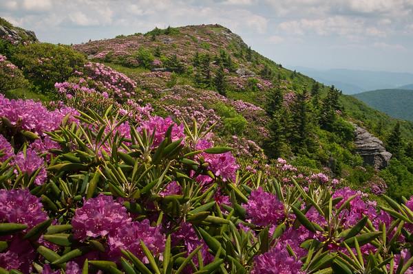 Grassy Ridge