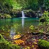 Maui's Oasis