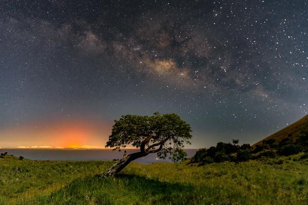Mauna Kea Tree View of the Eruption