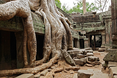 """Siem Reap, Cambodia Ta Prohm temple at Angkor with Strangler Fig Tree roots growing over the ruins. (Ta Prohm was the temple where the movie """"Tomb Raider"""" was filmed)."""