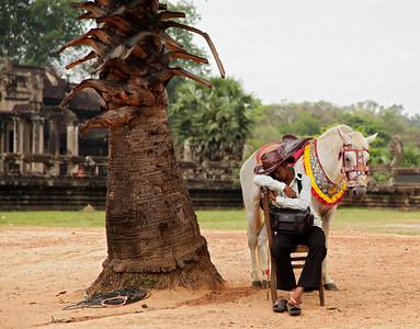 Siem Reap, Cambodia Sleeping horseman at Angkor Wat.