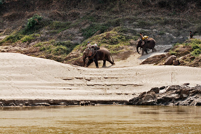 northern Laos Elephants along the edge of the Mekong River in northern Laos.