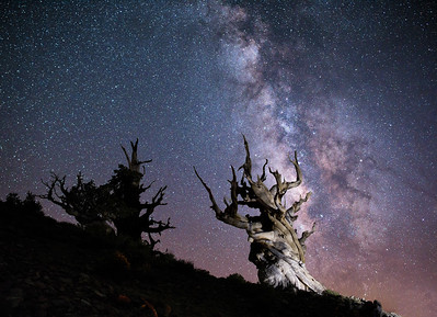 Milky Way and Great Basin Bristlecone Pines
