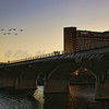 Austin's Bridge Bats