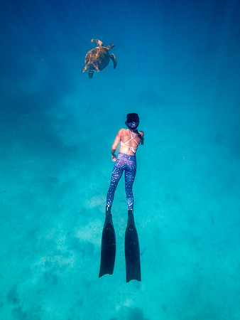 Swimming with turtles at Heron Island