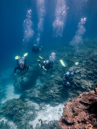 Divers on the Great Barrier Reef around Heron Island