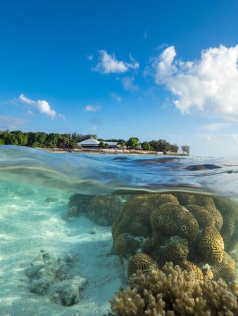 Coral gardens at Heron Island