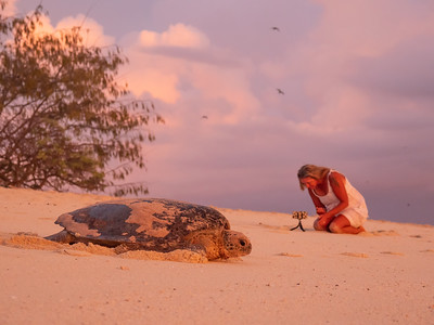 Watching the turtles nesting on Heron Island