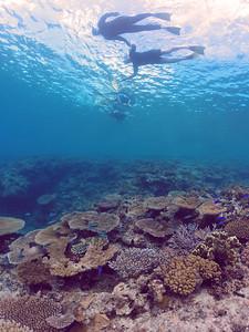 Snorkelling Heron Island