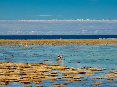 Guided reef walk on Heron Island