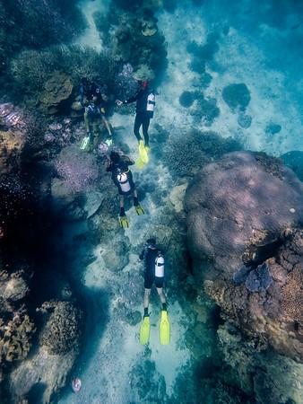 Diving on Heron Island