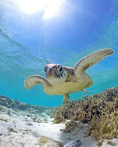 Turtle adventures on Lady Elliot Island