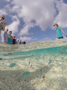 Fish feeding at Lady Elliot Island