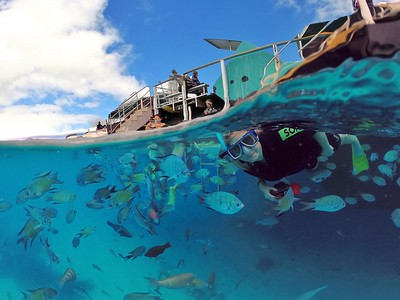Snorkelling at Lady Musgrave Island