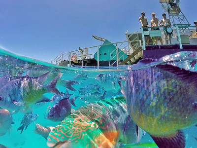 Colourful fish at Lady Musgrave Island