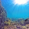 Snorkelling Magnetic Island