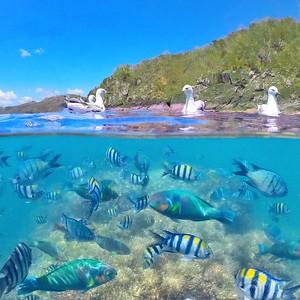 Daydream Island 2