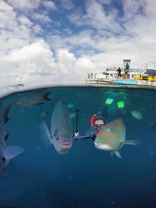 Photobombing fish!