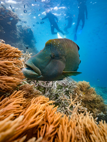 An Instagrammer's Guide to Cruise Whitsundays' Reef Sleep