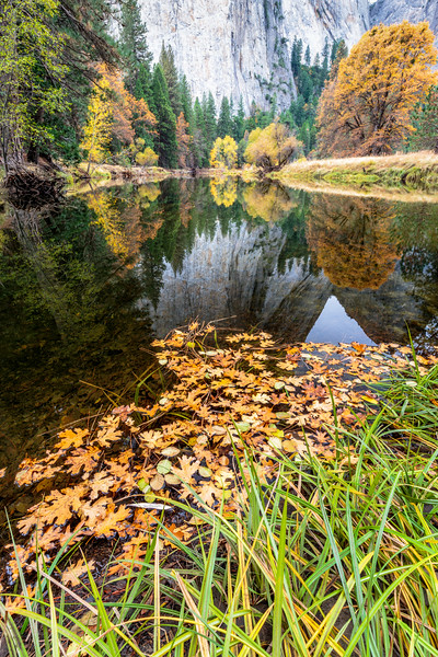 Reflection of Autumn Colors and Cathedral Rocks
