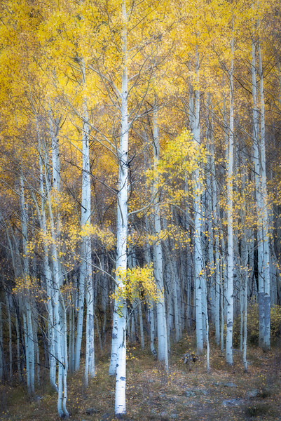 Aspen Tranquility