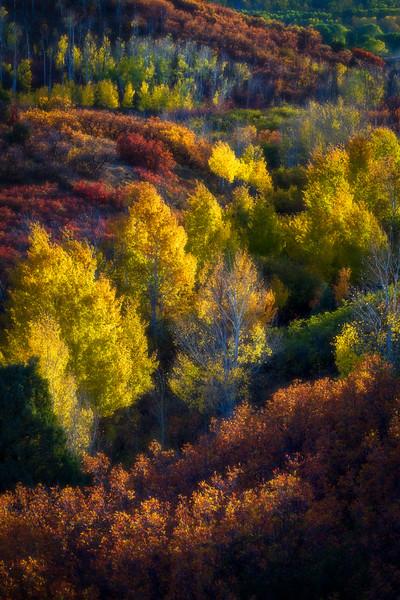 San Juan Mountains Autumn Color