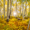 Colorado Aspen Light