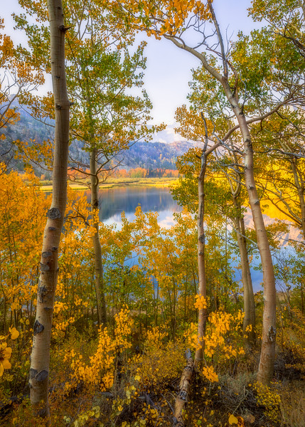 North Lake Golden Aspen