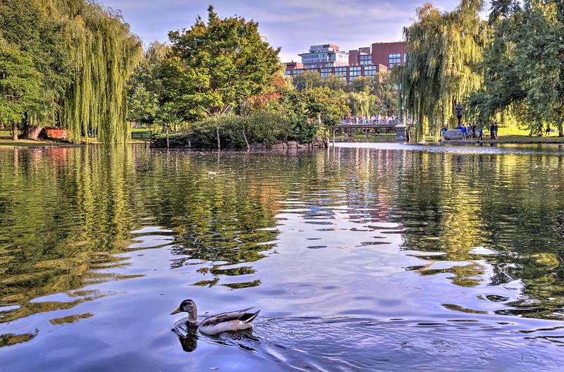 A Ducks Life