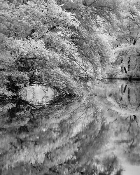 Infrared-Canon PowerShot G11-CA-2013-08-06_6652-Edit-Edit-Edit.jpg