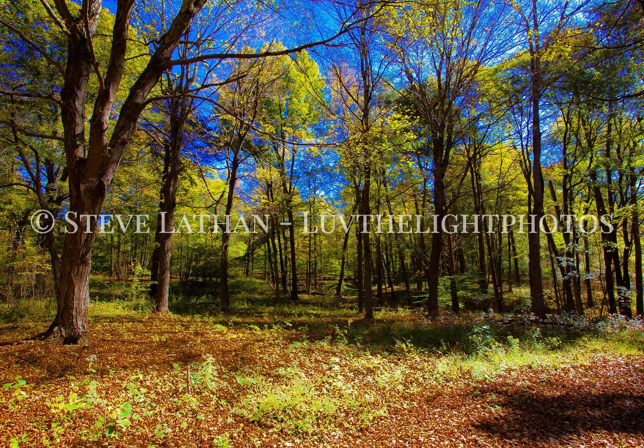 Fall Forest Shadows