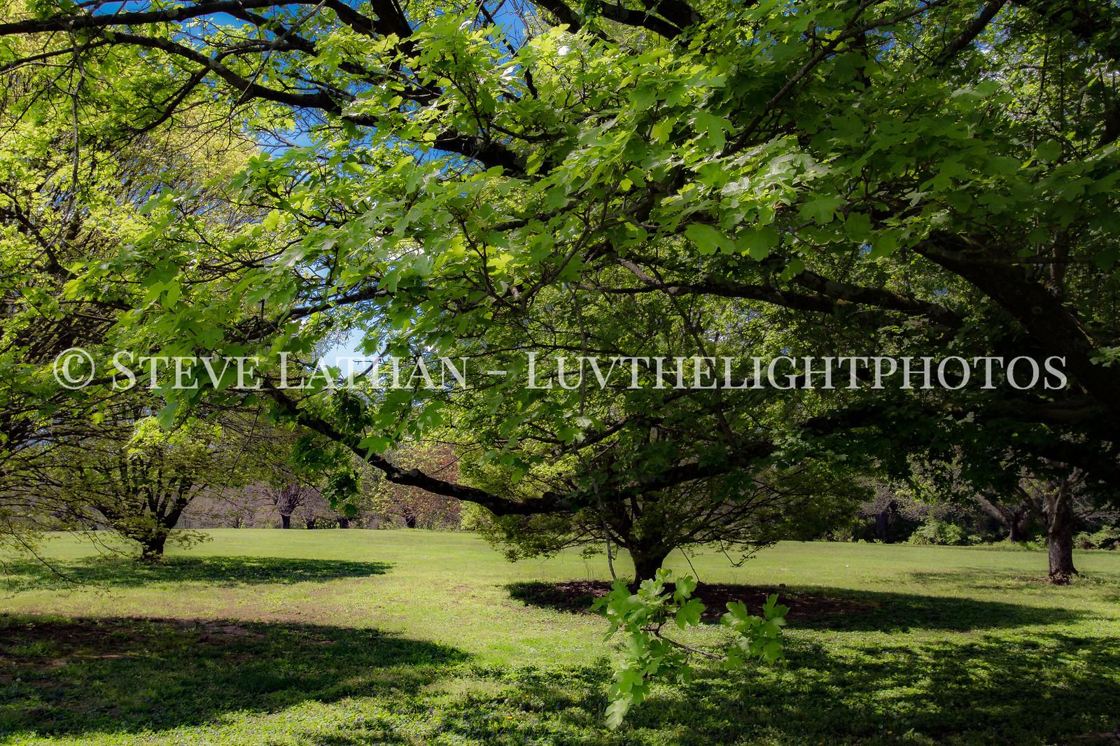 Leaf Canopy