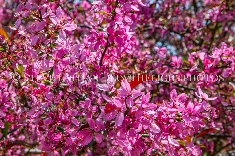Bernheim Spring-20.jpg