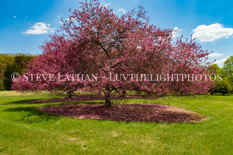 Bernheim Spring-15.jpg