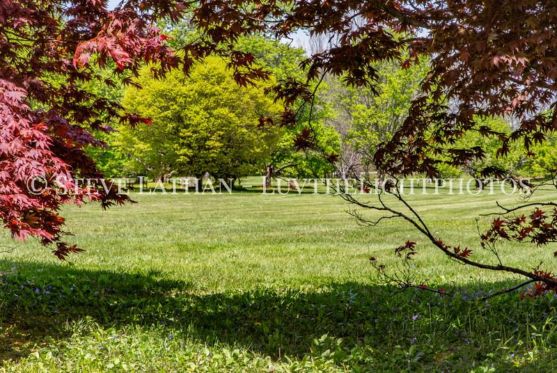 Bernheim Spring-13.jpg