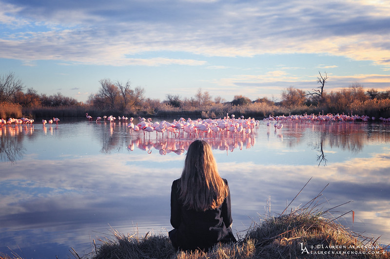 +.Flamingos Love.+