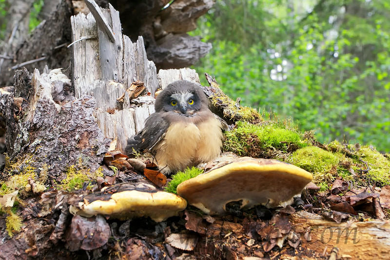 What could be more comfortable than a fungi with a back rest!