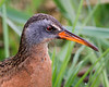 Virginia Rails: Ridgefield National Wildlife Refuge (April 2011)