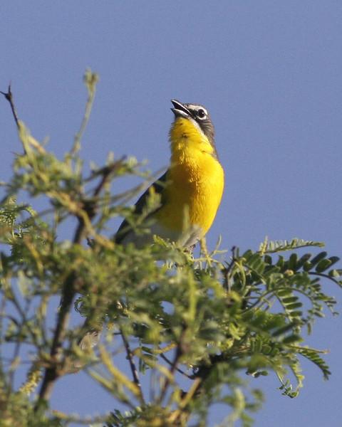 Chat: taken at Sierra Vista, AZ