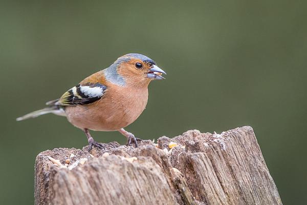 Birds (3 of 11)